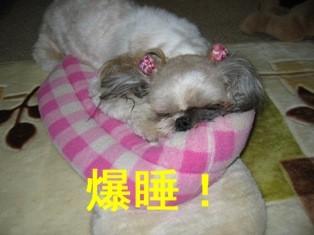 wanwan14.JPG