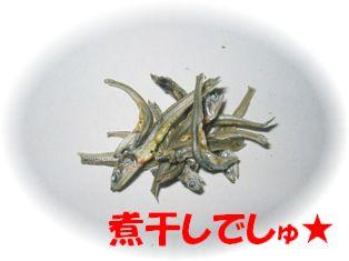 nibosi3.JPG